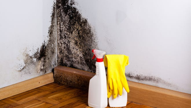 Mold and mildew can be difficult to clean and prevent from returning.