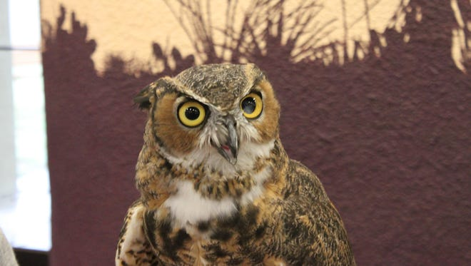 A great horned owl is on hand to educate participants about native wildlife, Sept. 30 at Living Desert Zoo and Gardens State Park.