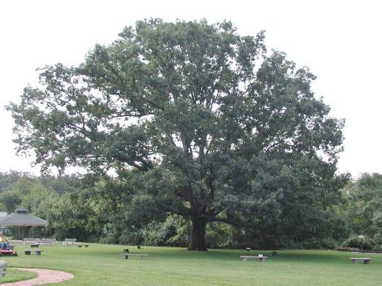 Tree 3 (002)
