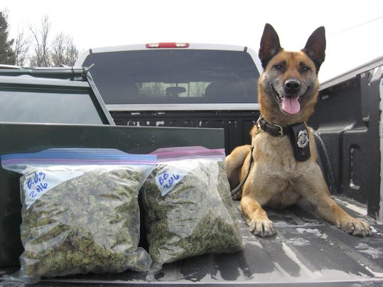 KEW 0225 drug bust dog.jpg