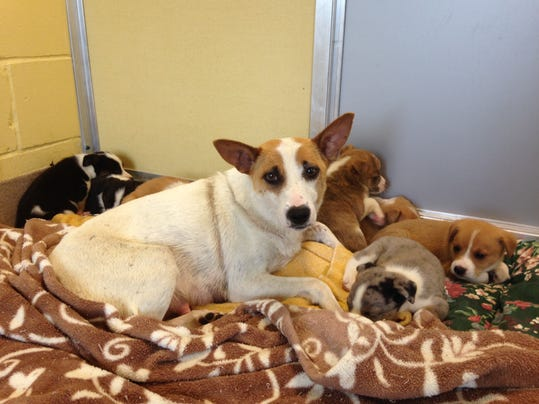 -Puppies 1.jpg_20140612.jpg