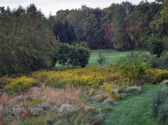 Gardening Meadow Planting