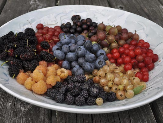 Gardening Berries