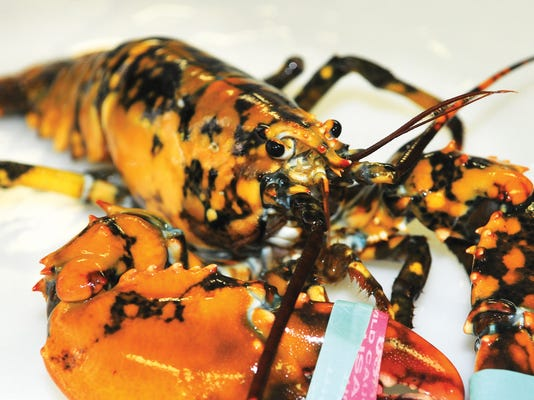 ODD Calico Lobster_Wage.jpg