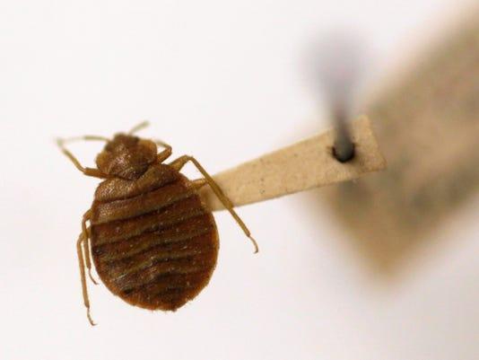 AP Bedbug Insecticide Risk