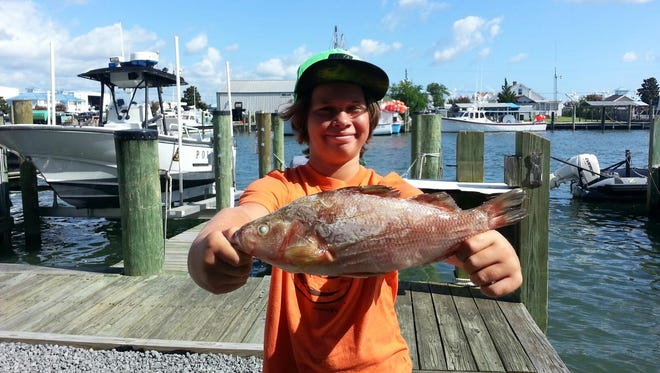 10-year-old Ryan Timmons of Berlin broke the Maryland Atlantic perch record with this 14.5-inch specimen caught in Ayers Creek.