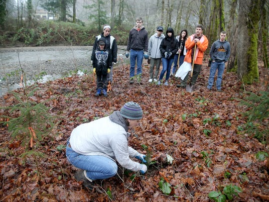 Amy Lawrence, WSU Extension native plant advisor, show volunteers the correct way to plant a cedar tree along the banks of Chico Creek at the Chico Salmon Park in Bremerton. Volunteers log thousands of hours in city and county parks across Kitsap County.