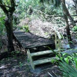 Privately-owned 10 acres in Estero could become a natural preserve