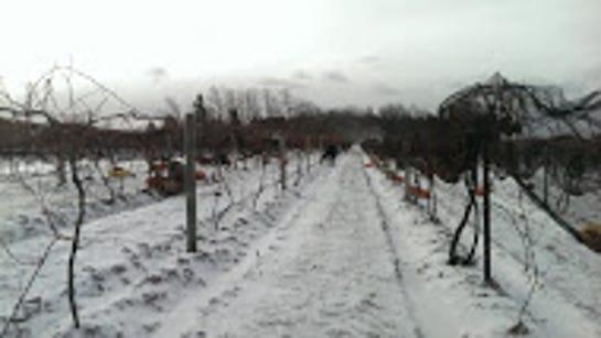 Mother Nature kept it cold last week for Casa Larga's