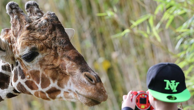 A giraffe looks at a young visitor at the zoo in Duisburg, Germany.