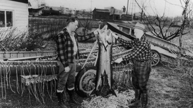 A Wisconsin game warden and an assistant hold up confiscated sturgeon in 1942.