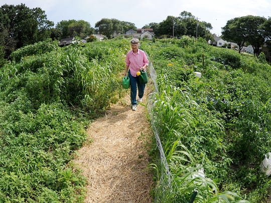 Plot gardening enthusiast Mary Drzewiezki carries watering cans through the lush foliage to water the vegetables in her plot in the Maple and Augusta community gardens  Wednesday] in Green Bay.