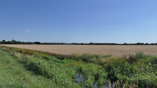 A field of wheat basks in the sunlight June 23 in Hutchinson.