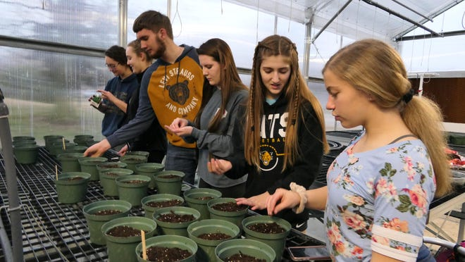 Students from the Haven High School greenhouse management class plant tomato seeds in pots in the school's new greenhouse.