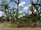 What is left of the storm damage in the Queensborough