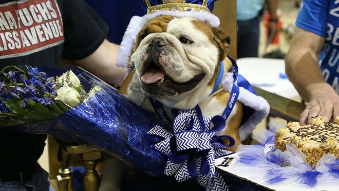 Tank, owned by Duane Smith of Des Moines is the winner of the 2015 Beautiful Bulldog Contest on Sunday, April 19, 2015 in the Knapp Center.