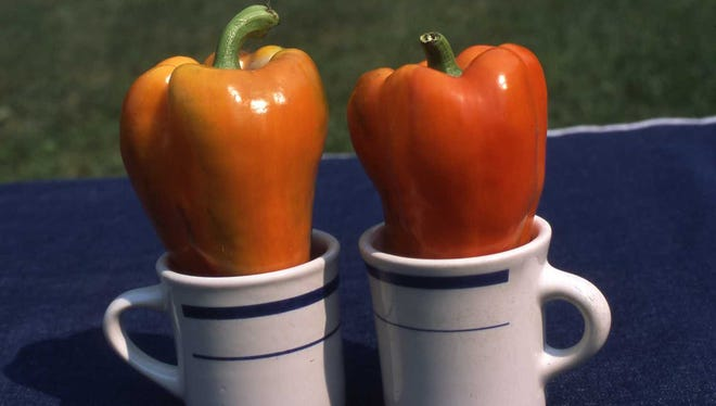 """This new orange sweet bell pepper is recommended for growing in 2018. It is named """"Garfield"""" and used for stuffing, salads and stir-fry. Richard Poffenbaugh Photo."""