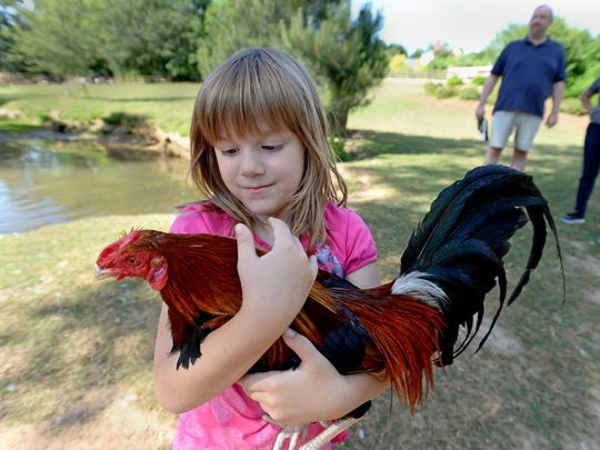 Izzie Askew holds a rooster at her parents waterfowl and rescue sanctuary Izzie's Pond in Simpsonville, Friday, May 22, 2015.