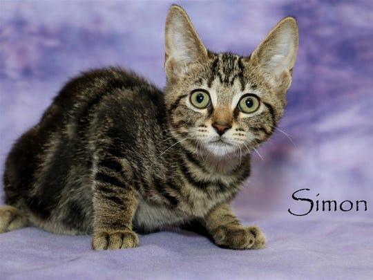 Simon #661782