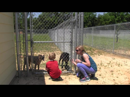 Visitors spend time with dogs at Hope Animal Sanctuary