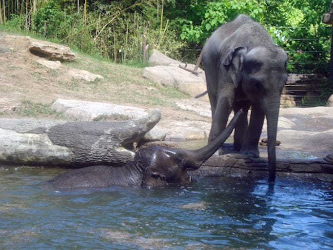 Saint Louis Zoo ranks No. 3 in the United States and No. 4 in the world.
