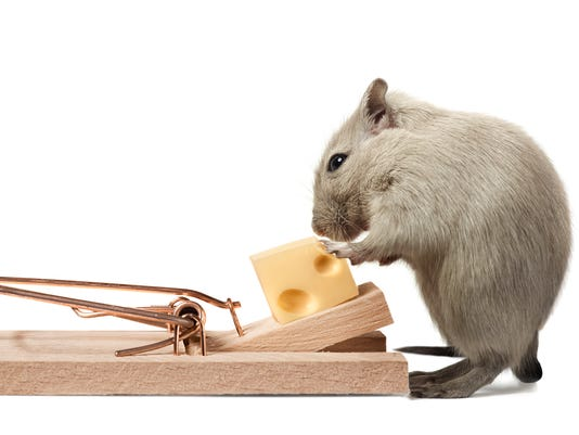 Mouse Trap Generic Stock Image