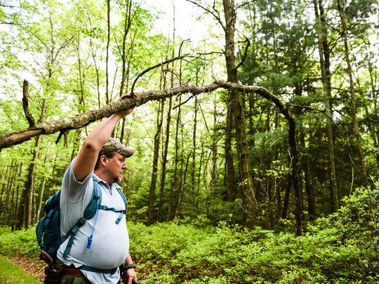 "Dave Levack points out a ""u"" shaped tree branch that is an indication of Sasquatch activity as he searches for a Sasquatch a forest located in Schyulkill County on Saturday, May 27, 2017"