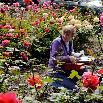 Master Gardener Annie Skinner of Exeter prepares to pick roses at the Public Rose Gardens at the Tulare County Superior Courthouse in 2011. Master Gardeners offer gardening assistance in person at events, over the phone and online.