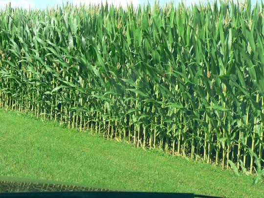 Not too long ago, 150 bushel corn was a lofty goal.