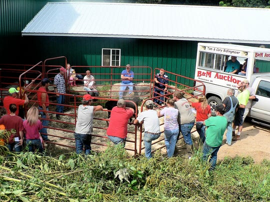 The auction of 48 cows and heifers marked the end of dairying at the Moen farm near Argyle.