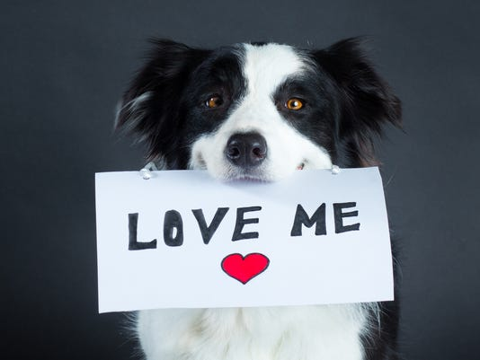 Dog holding a piece of paper with lettering