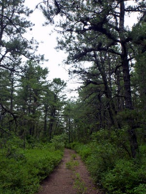 A trail leads through the Zemel property, recently annexed to the Franklin Parker Preserve in Woodland.