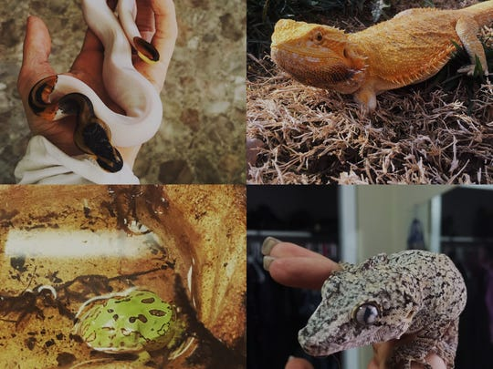 Island of Misfit Morphs houses over 30 different reptiles that would otherwise be killed for their oddities and educates the public about them.
