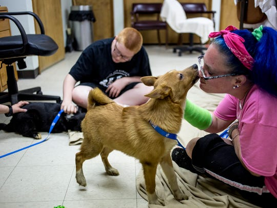 Volunteer Joanie Hickson, of Clyde Township, gets a kiss from a Norwegian buhund puppy as she works on socializing it along with her son Connor Hickson, 12, Friday, June 17, 2016 at the Blue Water Area Humane Society, 6226 Lapeer Road in Clyde Township. The shelter was surrendered 6 of the 98 dogs taken from a Cottrellville Township home this week.