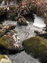 """Swamp Stream"" by Judy Kelley-Moberg."