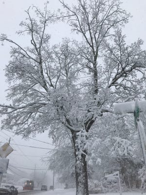 A tree on Riverside Drive in Binghamton was coated in snow Friday.
