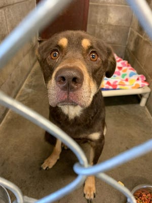Seth, a 1-year-old male Doberman/Rottweiler type dog, is in Ontario County Humane Society custody and will be placed for adoption soon.