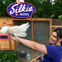 "Fondren artists Scott and Allison Allen a couple of their exotic chickens in front of the ""Silkie Motel,"" a designer chicken coop they built for their chickens."