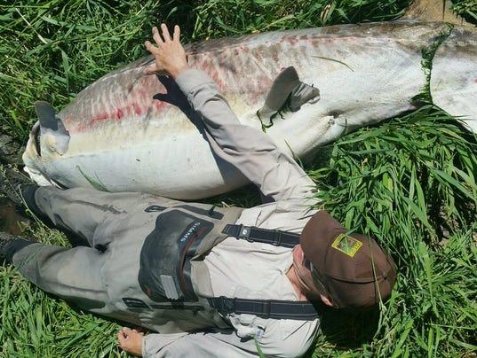 636338230777949050-fish.jpg