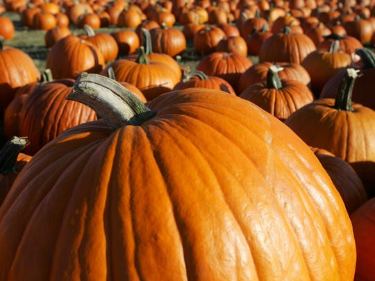 Pick pumpkins and walk through corn mazes at area farms.