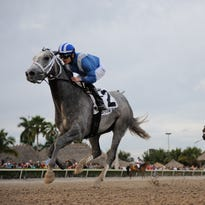 Mohaymen ran to a 3 1/2-length victory in Saturday's Holy Bull Stakes at Gulfstream Park.