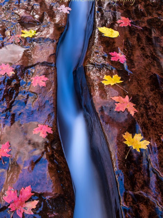 Red Cliff Gallery-photo-water and leaves copy
