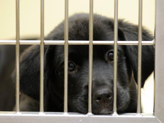 -Adoption 2.jpg_20110615.jpg