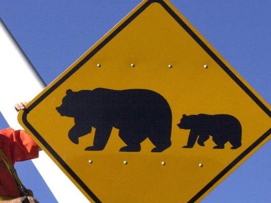 635767131667789769-bear-crossing