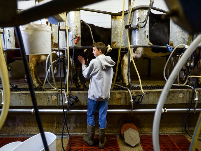 Kyle Strunk pets a cow as she is milked at Taft Hill Dairy on Tuesday, March 18, 2014. Taft Hill Dairy is a Community Supported Agricultures (CSA).