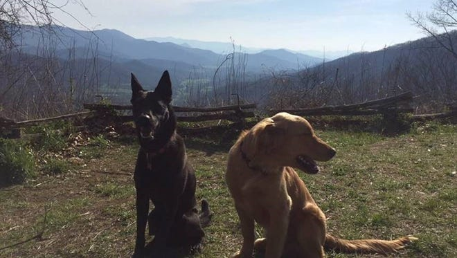 Rodney, left, and Reggie, a golden retriever, went missing June 15. Rodney turned up two days later, but Reggie is still missing.