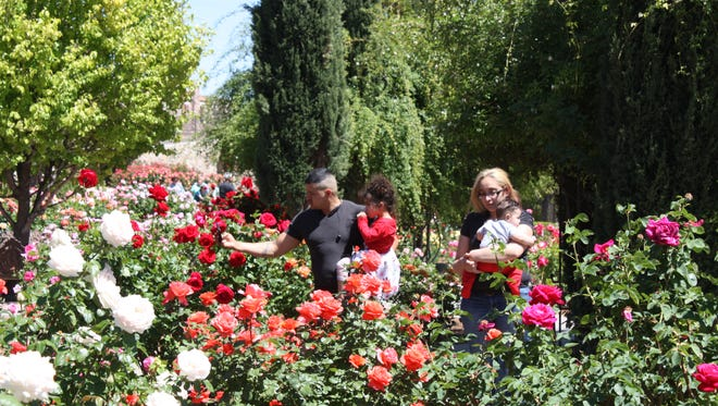 Visitors stroll through the El Paso Municipal Rose Garden on Saturday in Central El Paso.
