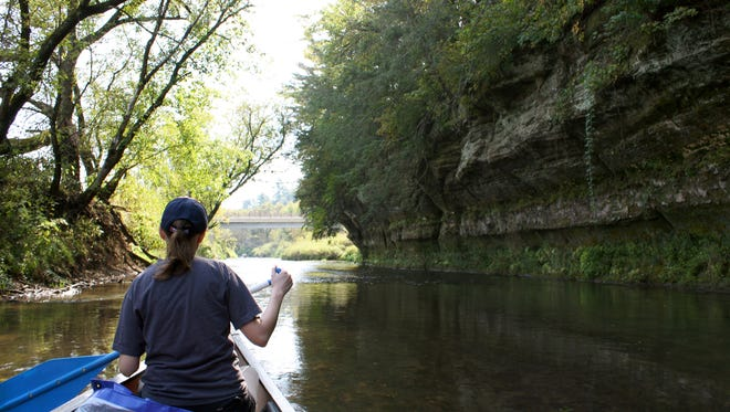 Moss, ferns and trees grow on the sandstone cliffs along the Kickapoo River, a favorite for paddlers in western Wisconsin.