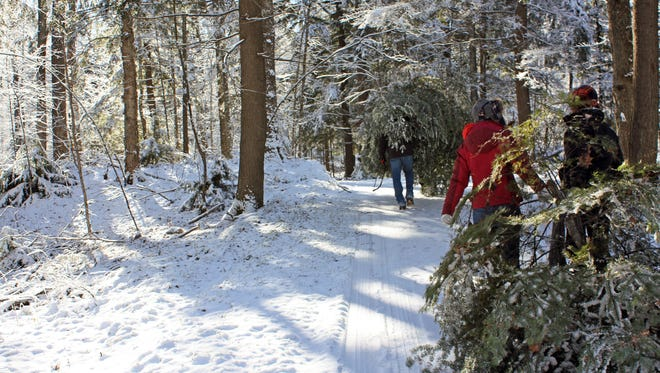 Getting your Christmas tree in the Northern Highland American Legion State Forest is a fun experience that involves hauling your tree back to your car after you cut it down.