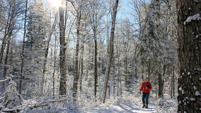 Snow clings to trees along the Raven Trail in the Northern Highland American Legion State Forest.